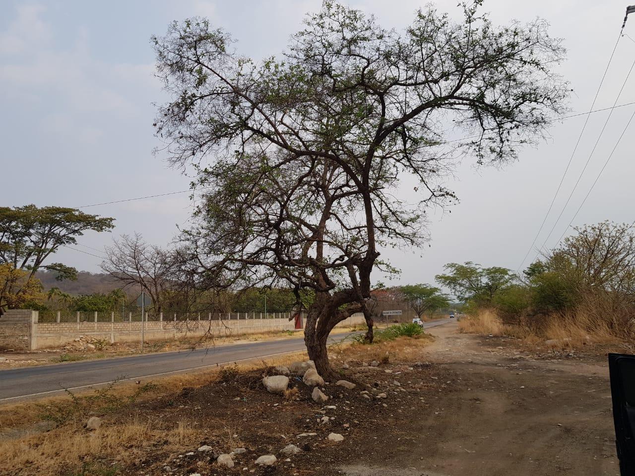 Oportunidad, terreno en esquina y frente a Carretera en Chiapa de Corzo